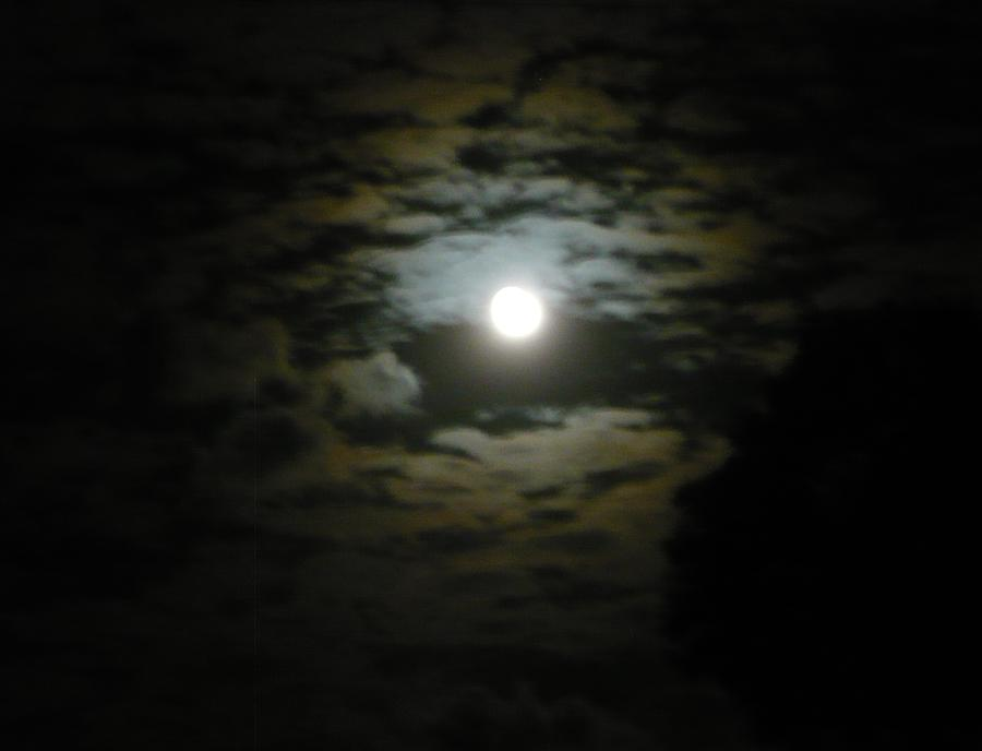 Leopard Moon Photograph by Adrianne Wood