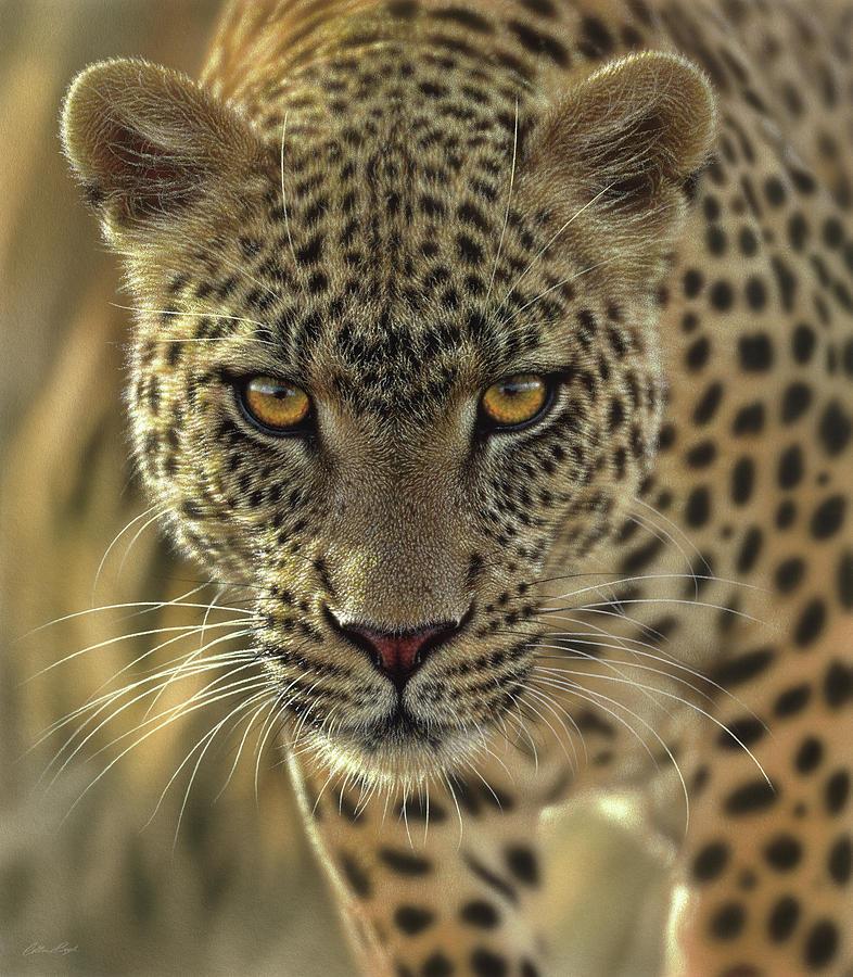 леопард картинки животного чемпионат мира