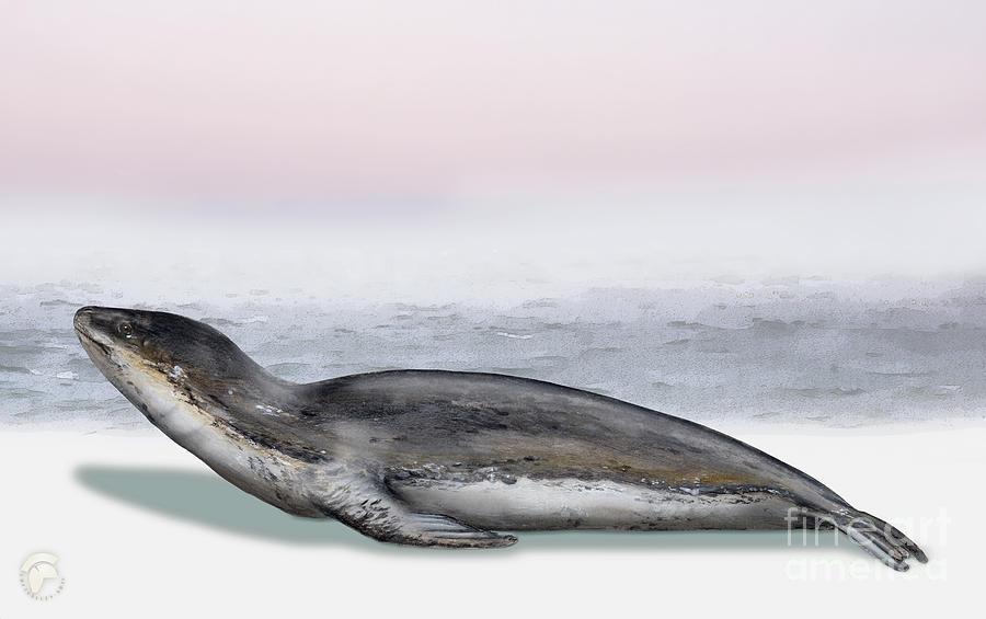 Marine Mammals Painting - Leopard Seal Hydrurga leptonyx - Marine Mammal - Seeleopard by Urft Valley Art \ Matt J G  Maassen-Pohlen
