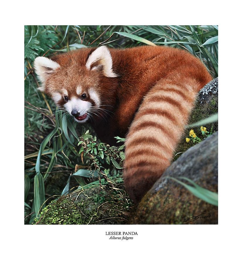 Panda Digital Art - Lesser Panda Ailurus Fulgens by Owen Bell