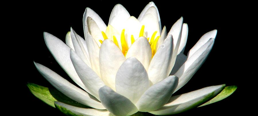 White Water Lily Photograph - Let It Go by Angela Davies