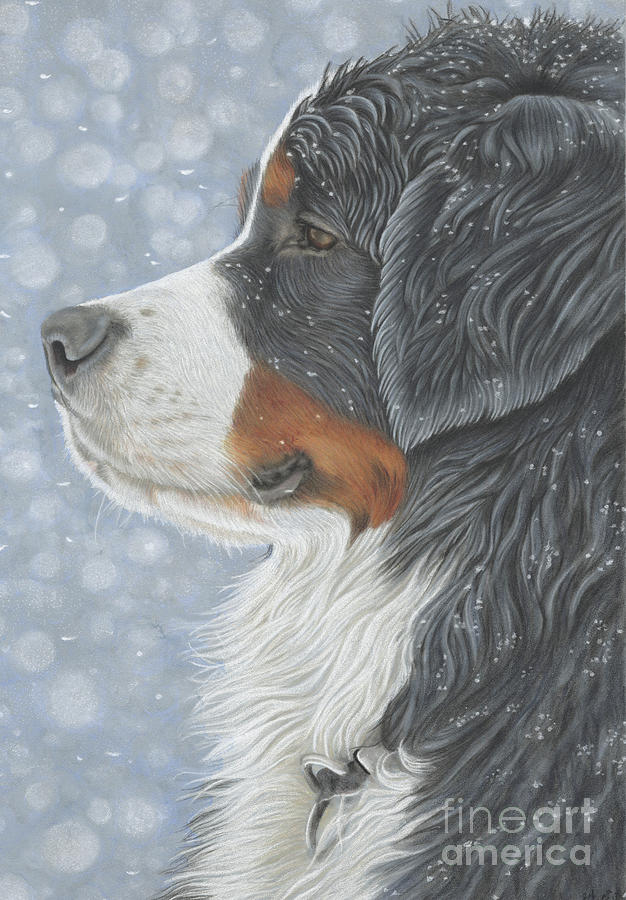 Bernese Painting - Let It Snow by Donna Mulley
