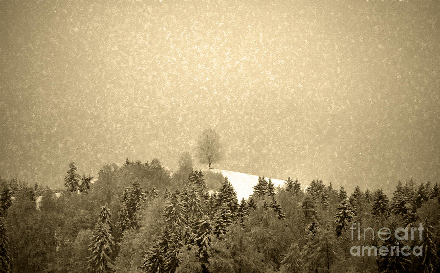Let It Snow - Winter In Switzerland Photograph