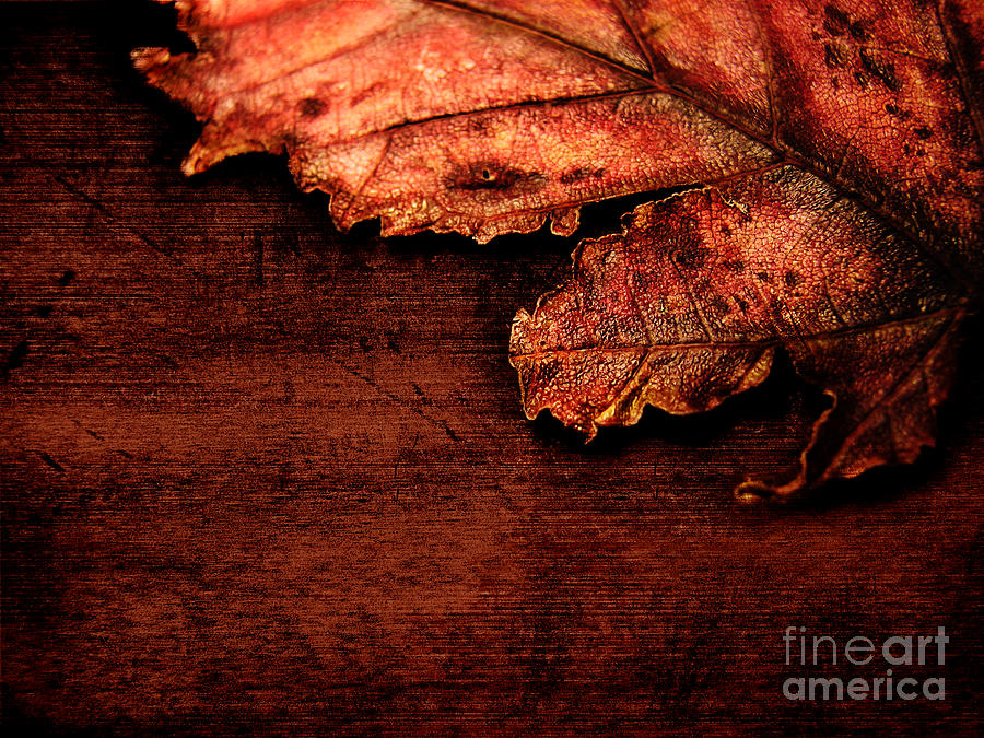 Red Photograph - Let Me Hold You...  by Dana DiPasquale