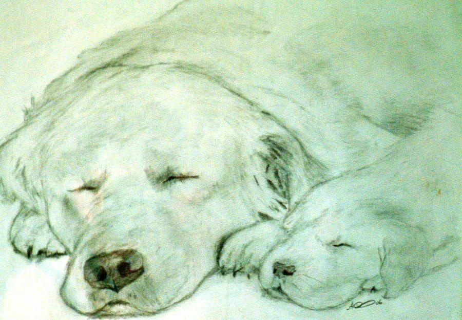 Animal Drawing - Let Sleeping Dogs Lye by Andrew Davies