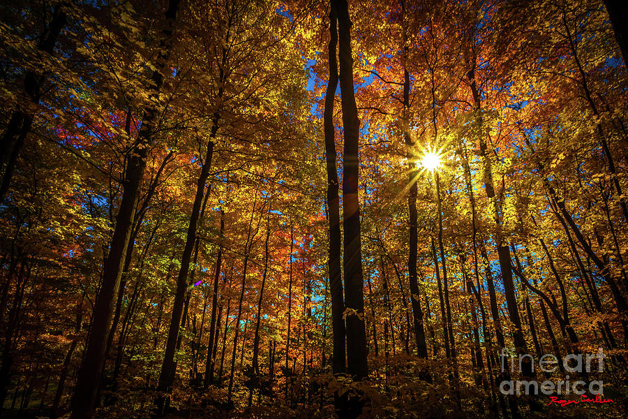 Fall Photograph - Let the Light Shine Through by Roger Carlsen