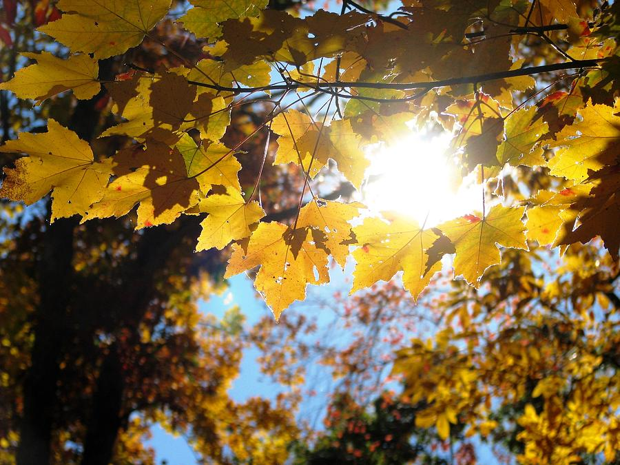 Gold Leaves Photograph - Let The Sun Shine In by Angela Davies