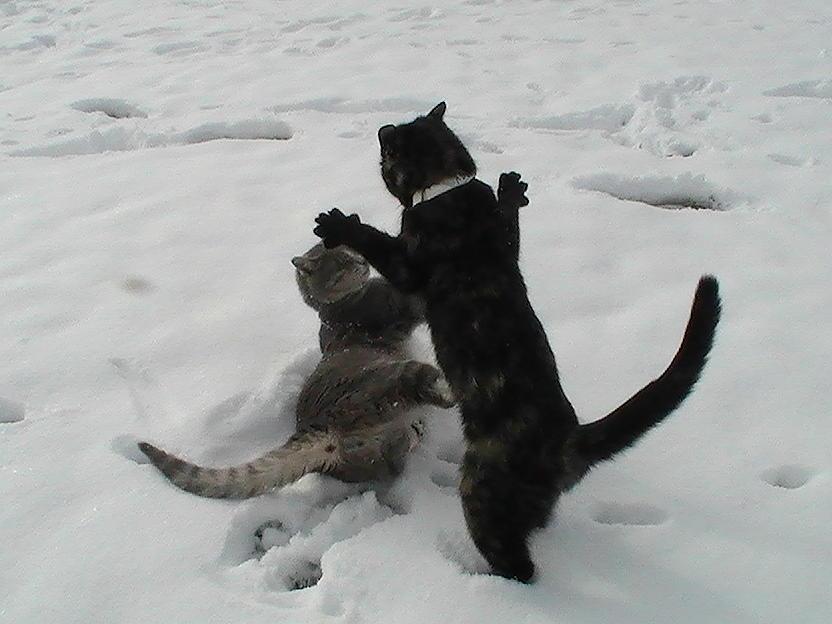 Animal Shelter Kittens Photograph - Lets Dance by Pat Nalls