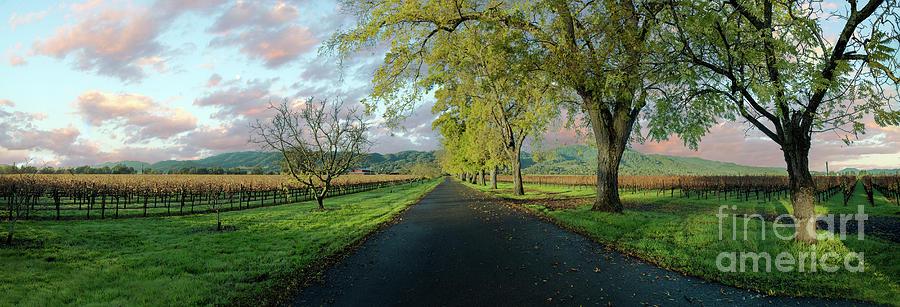 Napa Photograph - Lets Drive Through The Vineyard by Jon Neidert