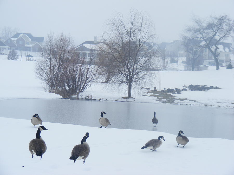 Pond Photograph - Lets Go by James and Vickie Rankin