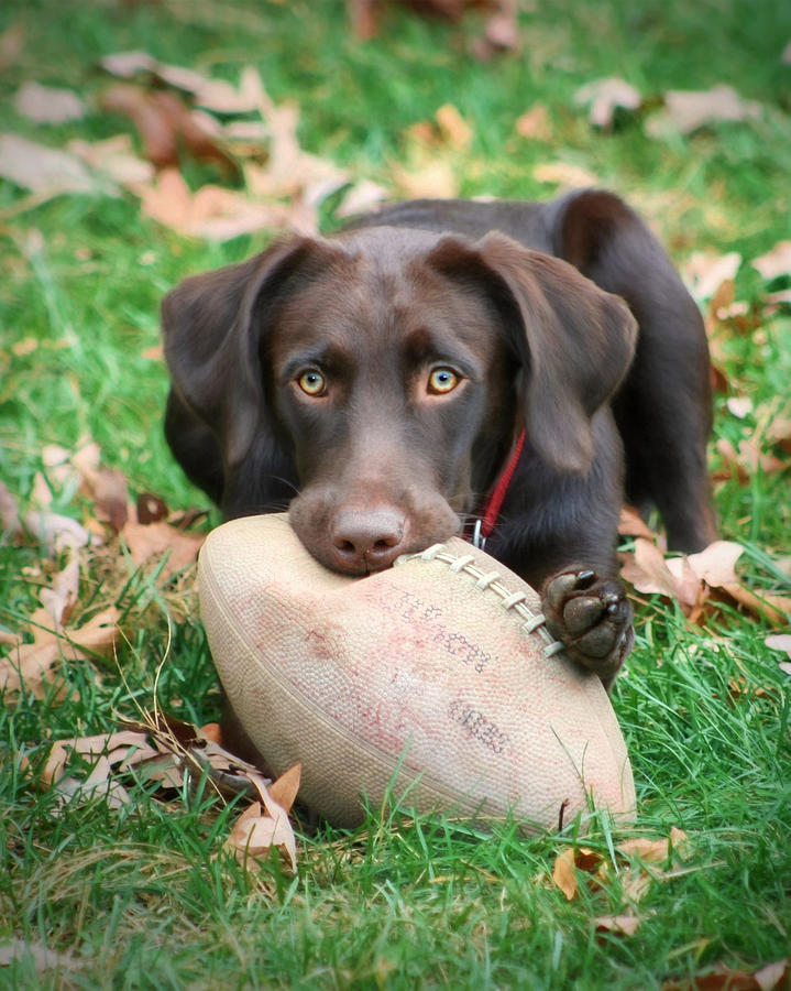 Sienna Photograph - Lets Play Football by Lori Deiter