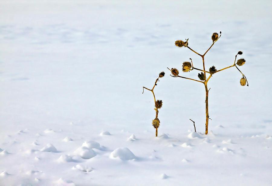Blur Photograph - Lets Stick Together by Evelina Kremsdorf