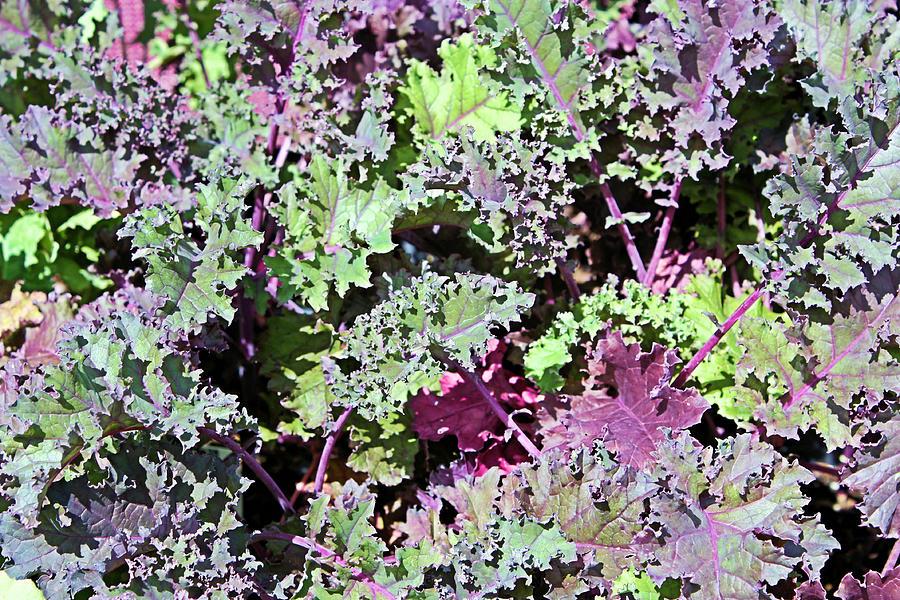 Lettuce by Kristin Elmquist