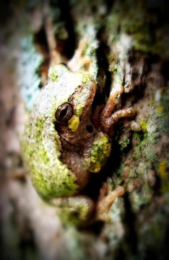 Tree Frog Photograph - Leveli Beka Ketto by Scot Johnson