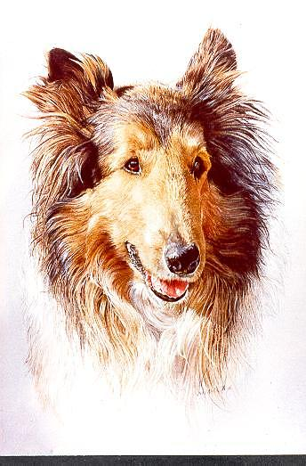 Dog Portrait Painting - Levis by Judith Angell Meyer