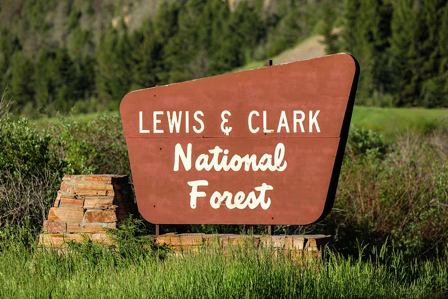 White Sulphur Springs Photograph - Lewis And Clark National Forest by Todd Klassy