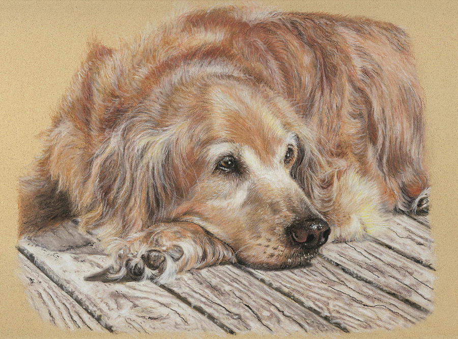 Canine Pastel - Lexie by Terry Kirkland Cook