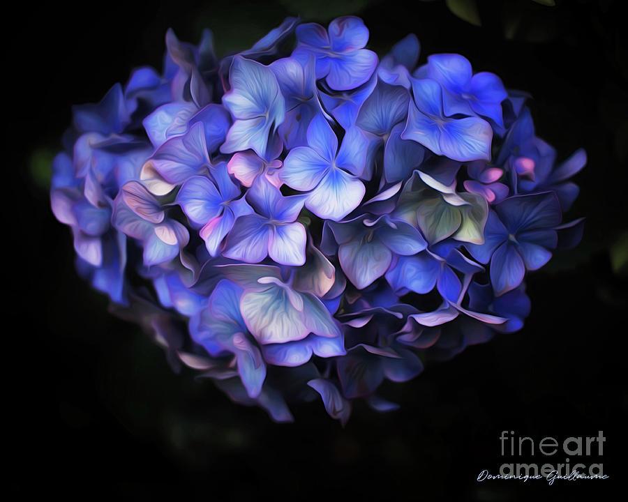 Hortensia Photograph - lHortensia bleu by Dominique Guillaume