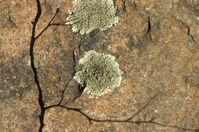 Nature Photograph - Lichen And Rock by Catherine Kelly