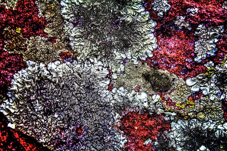 Lichen Colony on Red Rock by Roger Passman
