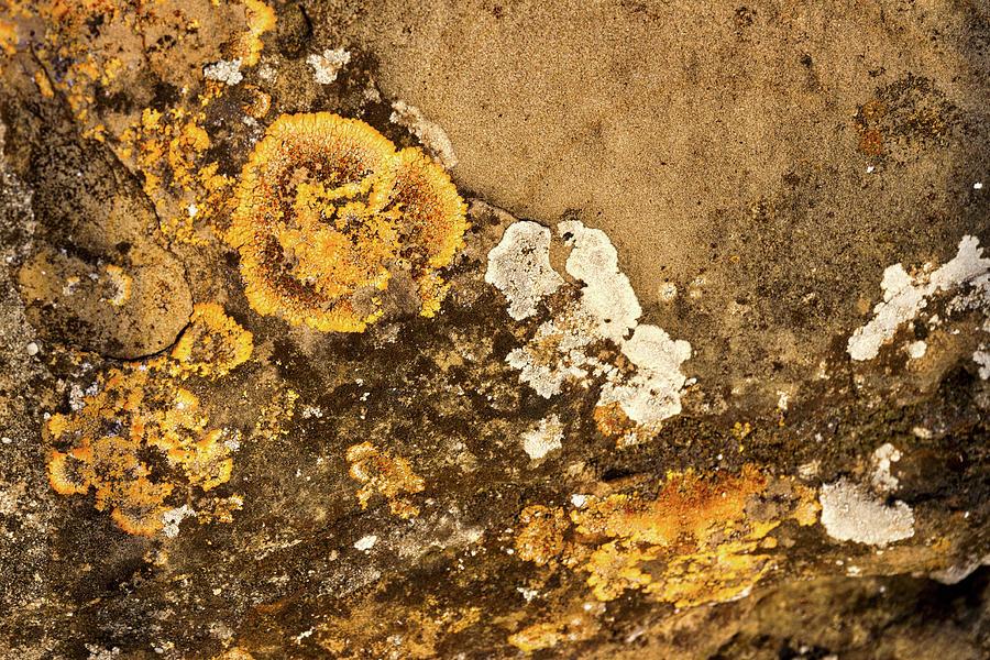 Piran Photograph - Lichen On The Piran Walls by Stuart Litoff