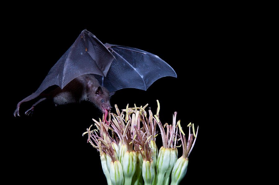 Nature Photograph - Licking Good 2 by E Mac MacKay