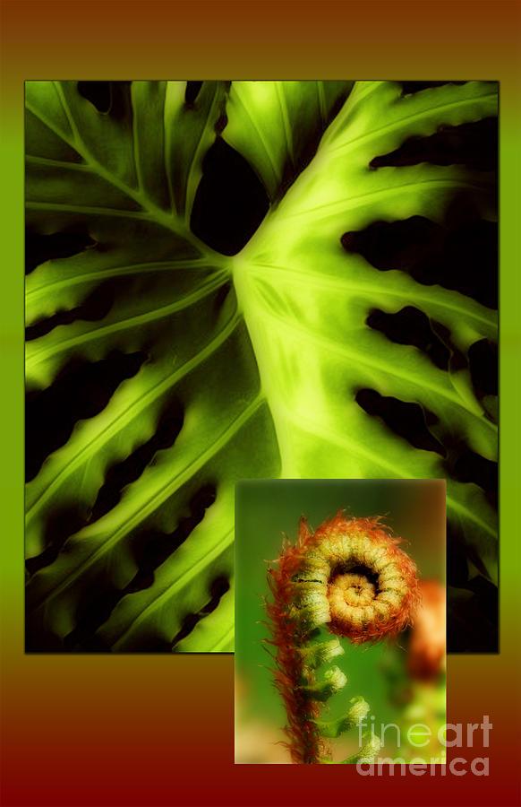 Leaf Photograph - Life Cycle by Ruth Kongaika