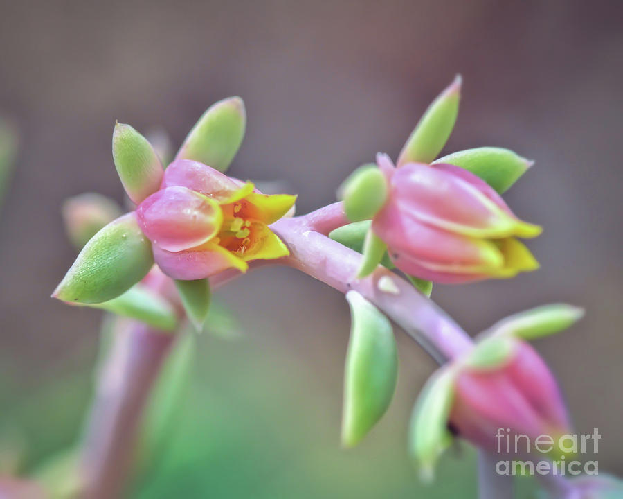 Sempervivum Photograph - Life Delights In Life by Kerri Farley