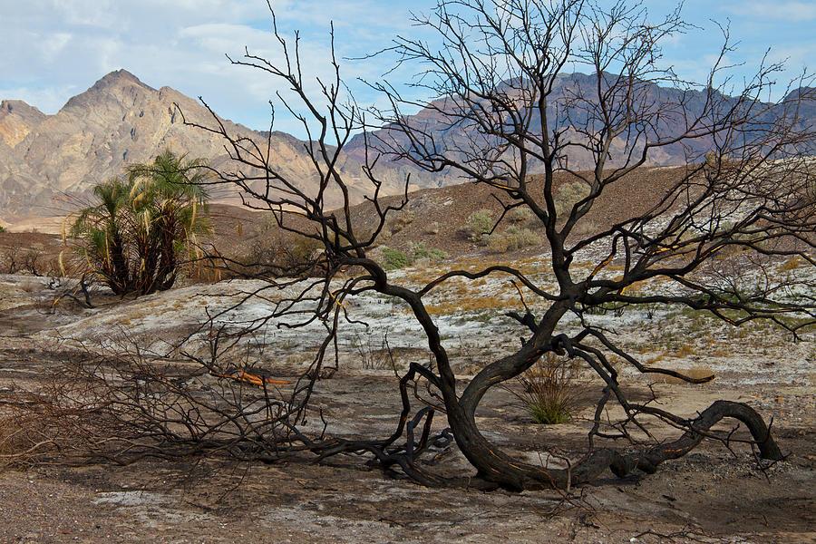 Desert Photograph - Life in the Desert by Neal Martin