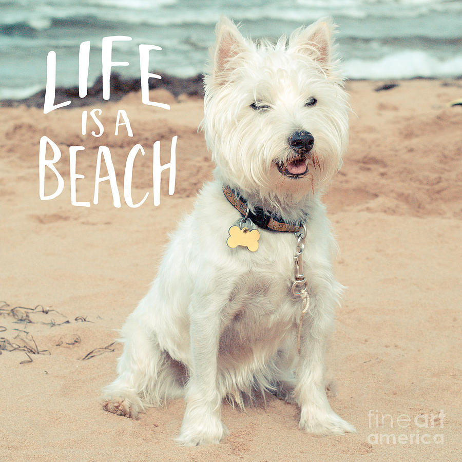 Dog Photograph - Life Is A Beach Dog Square by Edward Fielding