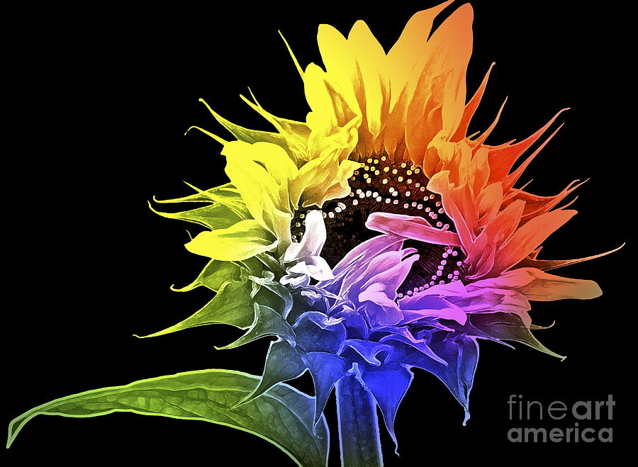 Sunflower Photograph - Life Is Like A Rainbow ... by Gwyn Newcombe