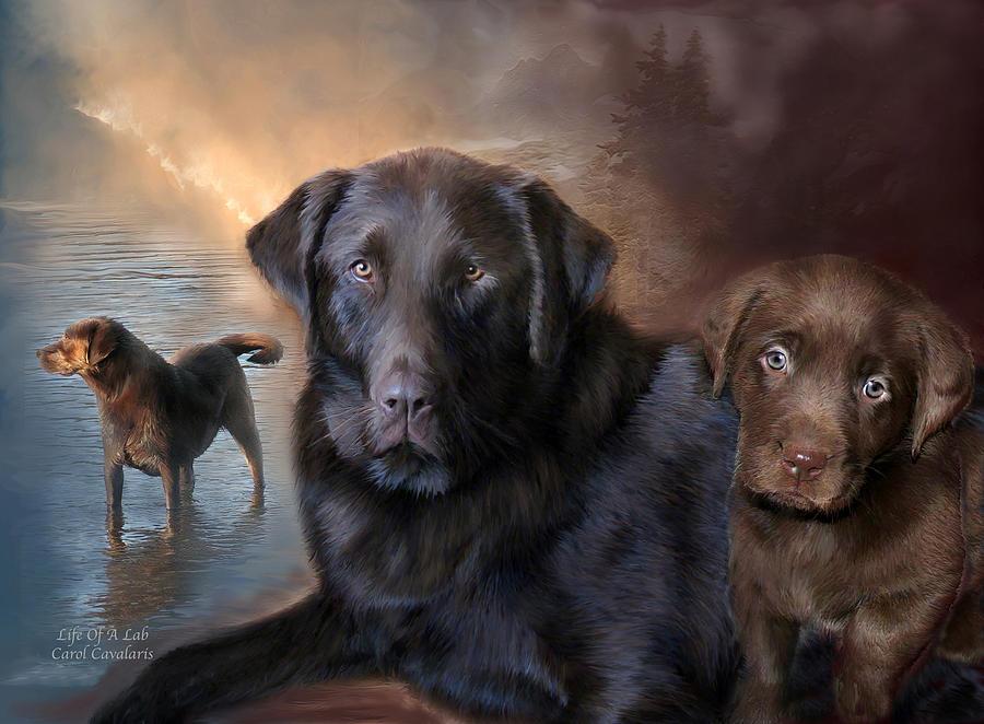 Labrador  Retriever Mixed Media - Life Of A Lab by Carol Cavalaris