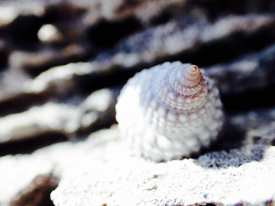 Caribbean Photograph - Life Of A Shell In Eleuthera by Lora Louise