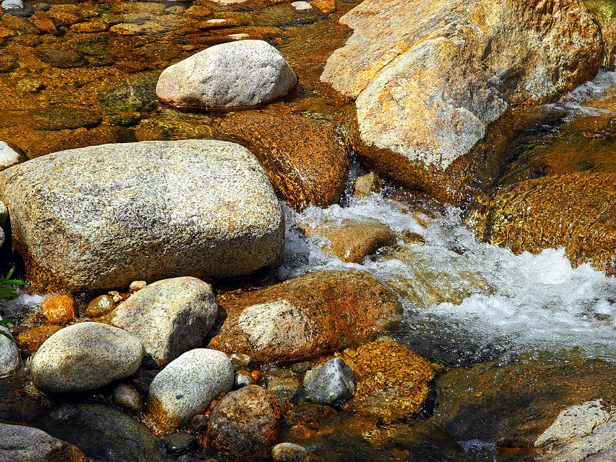 Water Photograph - Life Of The Riverbed by Lynda Lehmann