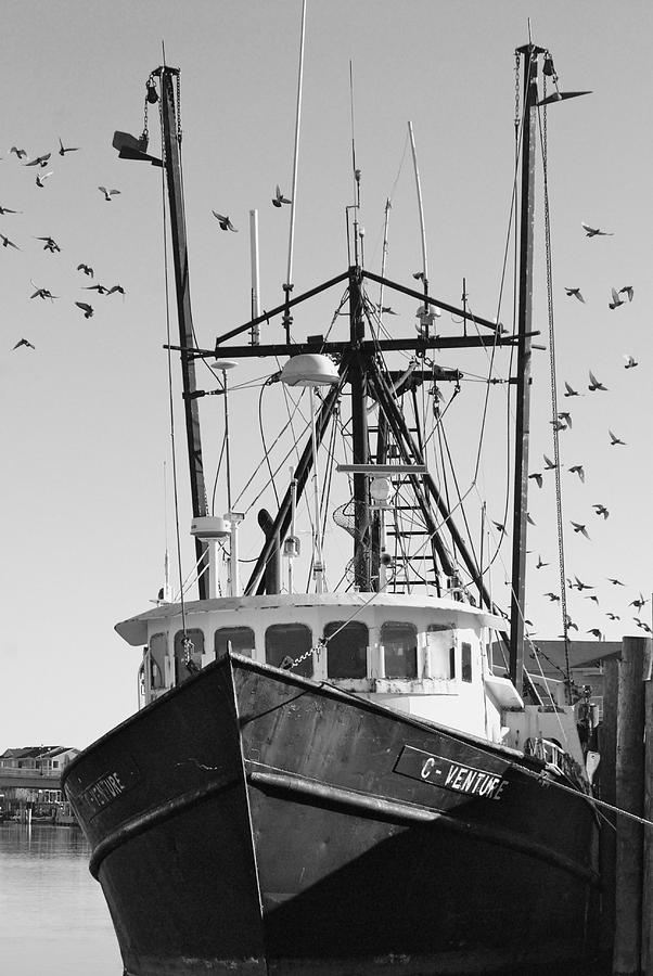 Nature Photograph - Life On The Island by Lori Hamilton