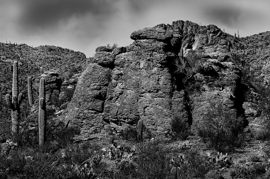Life On The Rocks Bw Photograph
