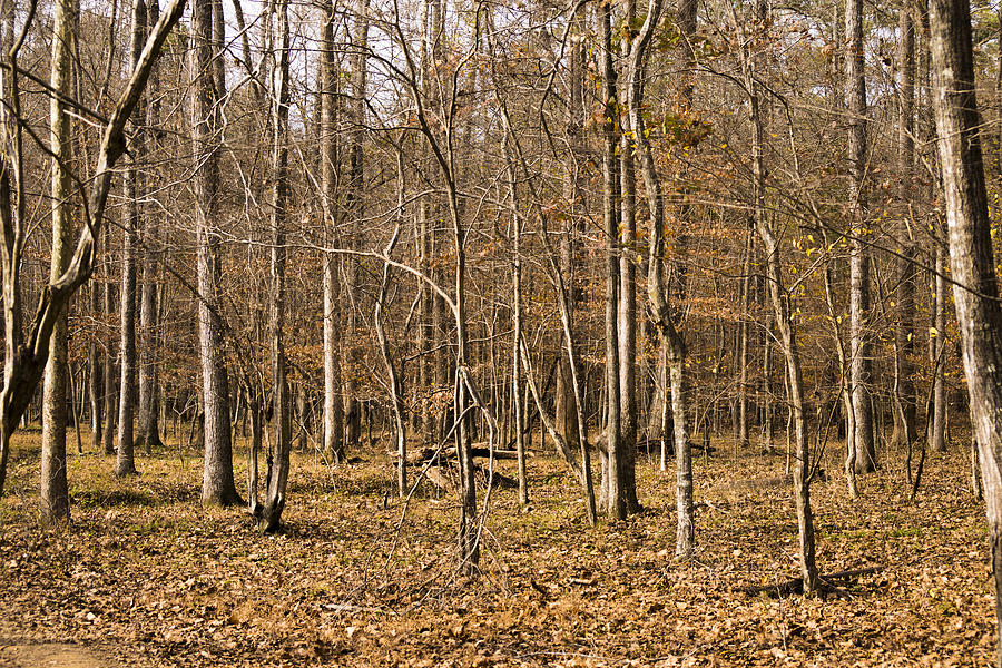 Forest Photograph - Lifeless by William Hall