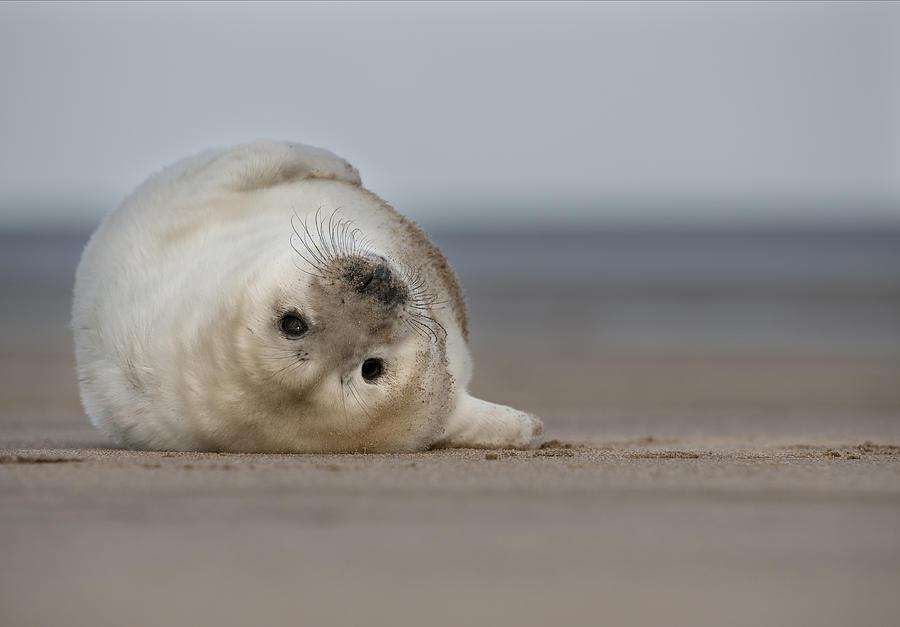 Cute Photograph - Lifes A Beach by Andy Astbury