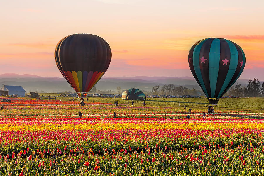 Hot Air Balloons Photograph - Lift Off by David Gn