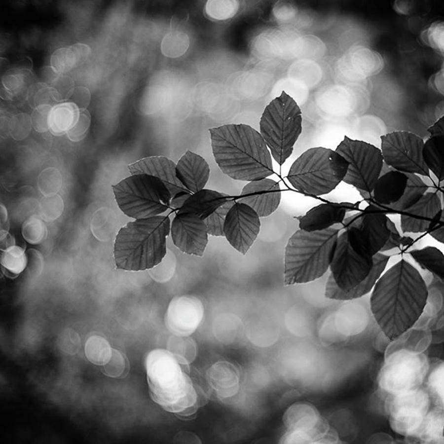 Nature Photograph - Light & Life by Aleck Cartwright