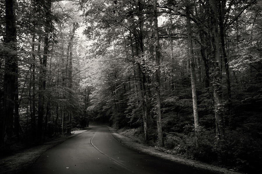 Light And Shadow On A Mountain Road In Black And White Photograph by Greg Mimbs