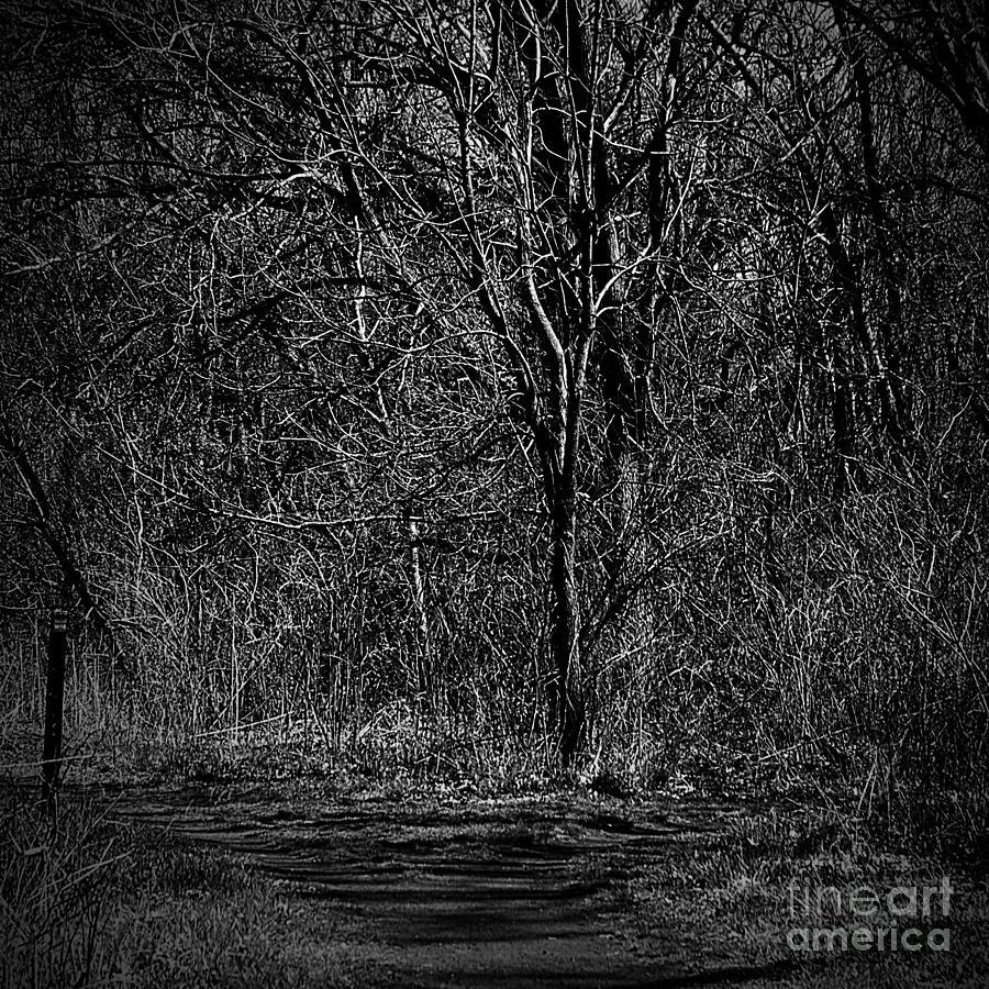 Light And Wood Monochrome Photograph