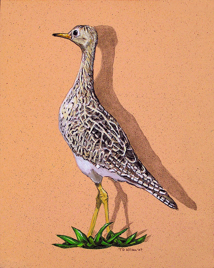 Pectoral Sandpiper Painting - Light Capture Of A Pectoral Sandpiper by TD Wilson