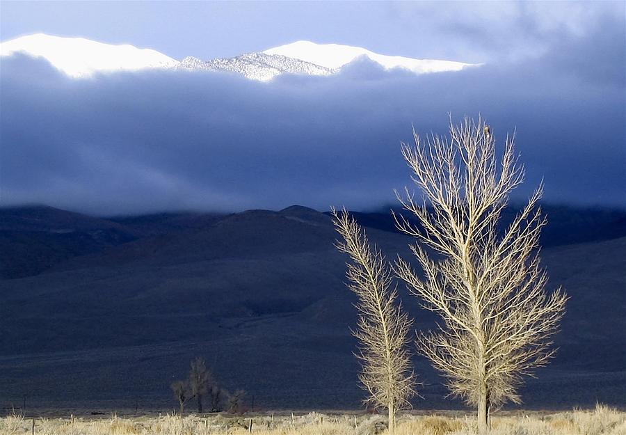 Tree Photograph - Light Hawk by Alpha Pup