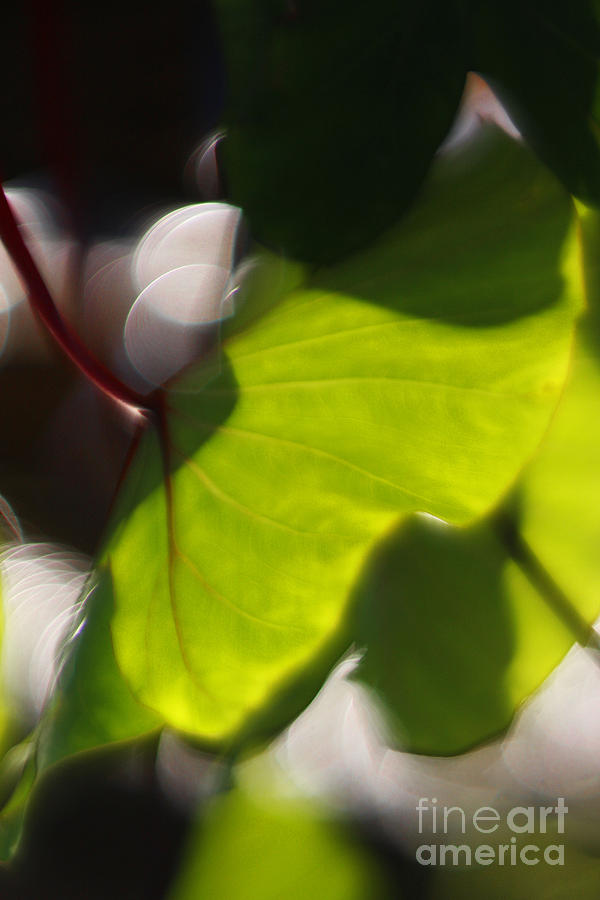 Green Photograph - Light I by Katherine Morgan