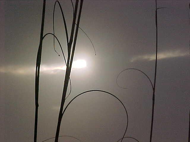 Sunshine Photograph - Light In A Darkened World by Ricky  Rayburn