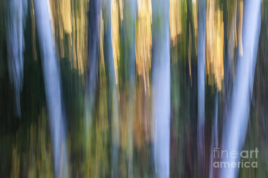 Abstract Photograph - Light In Evening Forest by Elena Elisseeva