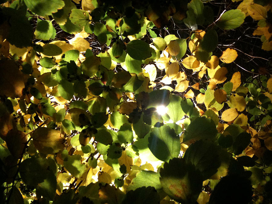 Light Photograph - Light In The Dark by Sara Efazat