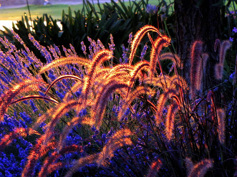 Landscape Photograph - Light Is Good by DEBRON Art