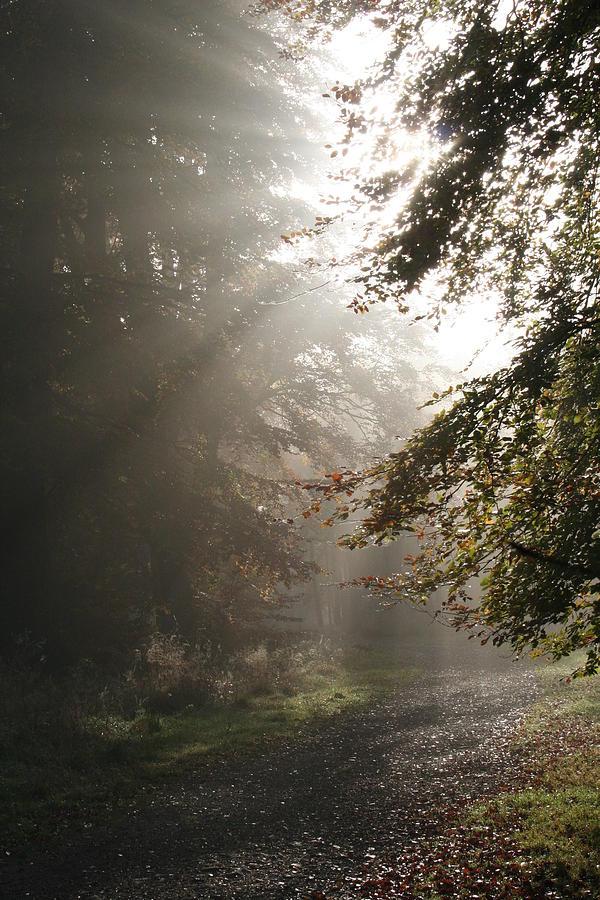 Savernake Forest Photograph - Light Is Life by Graham Ettridge